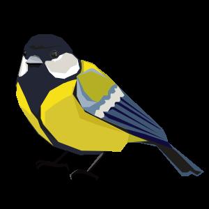 Vögel kennenlernen